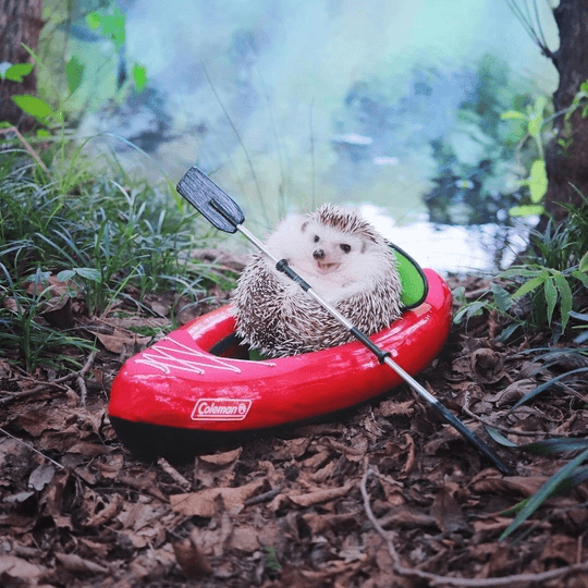 Featured image for the best hedgehog toys post